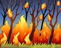 Bomen in bos in brand