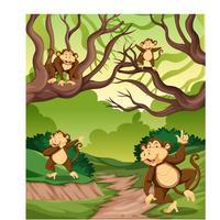 Aap in het wilde bos