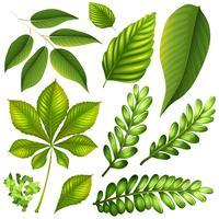 Ander soort bladeren