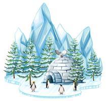 Pinguïns en uil door de iglo