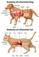 Anatomie van binnenlandse hond en kat