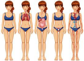 Een vrouwenlichaam en anatomie vector