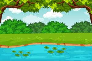groene vijver natuur scène vector