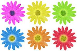 Kleurrijke bloemen vector