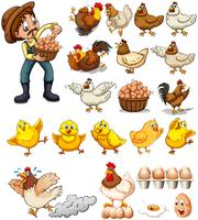 Landbouwer die eieren van kippen verzamelt