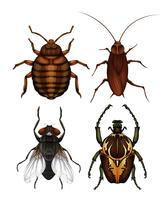 Een set van ziekte insecten vector