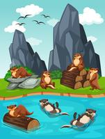 Otters die aan de rivier wonen
