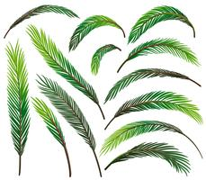 Set van groene bladeren vector