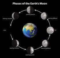 Fasen van de aardse maan vector
