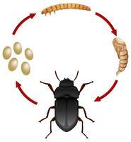 Levenscyclus van een maaltijdgedicht vector