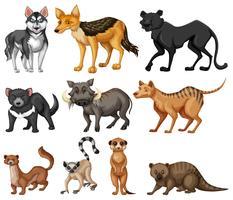 Verschillende soorten wilde dieren op wit vector
