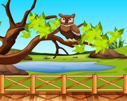 Een uil zit in een boomscène