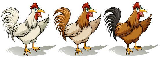 Groep hanen vector