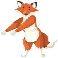 Een vos die flossdans doet