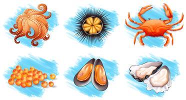Verschillende soorten verse zeevruchten