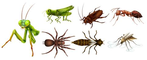 Verschillende soorten insecten vector