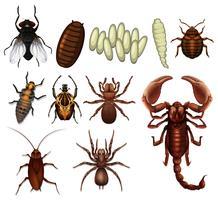 Een reeks insecten