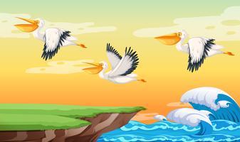 Pelikaan die op de hemel vliegt