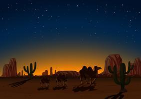 Silhouetkamelen in woestijn bij nacht vector