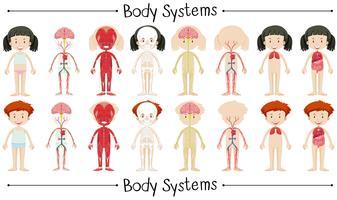 Lichaamssysteem van jongen en meisje vector
