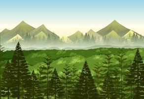 Achtergrond scène dennenbos