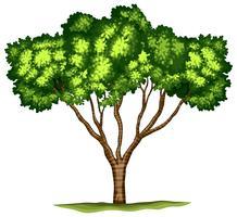 Geïsoleerde boom op witte achtergrond