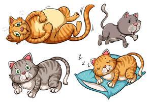 Een set kattenkarakters vector