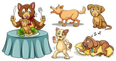 Honden in verschillende acties