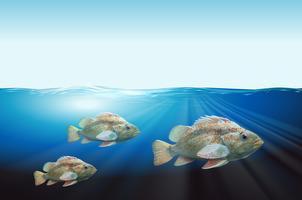 Drie vissen onderwaterscène vector