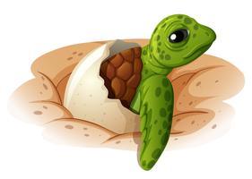 Babyschildpad die uit shell komt