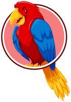 Een papegaai in cirkelsjabloon