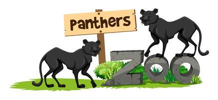 Twee panters in de dierentuin vector