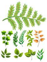 Verschillende soorten bladeren vector