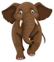 Babyolifant met bruine huid vector