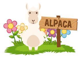 Leuke alpaca in de tuin vector