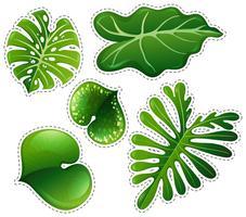 Sticker set van groene bladeren vector