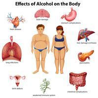 Effecten van alcohol op het lichaam vector