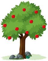 Geïsoleerde appelboom op witte achtergrond vector