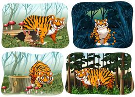 Vier scène van tijger die in het bos leeft