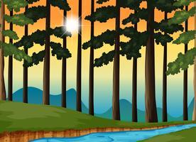 Bosscène bij zonsondergang vector
