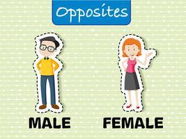 Tegenovergestelde woorden voor mannelijk en vrouwelijk