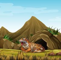 Wilde tijger voor grot