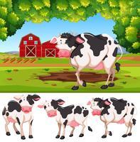 Koe op het platteland vector