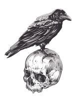kraai op schedel vector