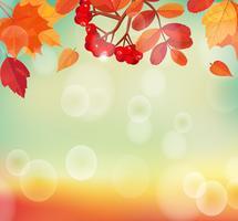 Herfst achtergrond met kleurrijke bladeren en rowan.