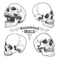 Anatomische schedels Vector Set