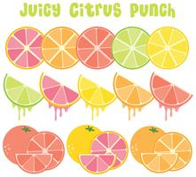 Citrus Fruit-collectie vector