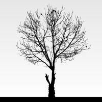 Droog dood boomsilhouet. vector