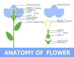 Detail van anatomiebloem. vector