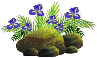 Ierse bloemen in de struik vector